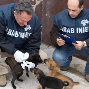 Carabinieri Nas Benessere Animale Sanzioni E Sequestri