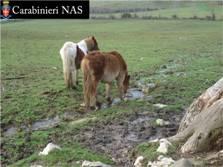 Cavalli e altri animali maltrattati e abbandonati