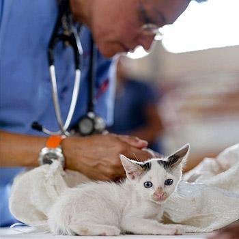 immagine di una veterinaria con alcuni animali
