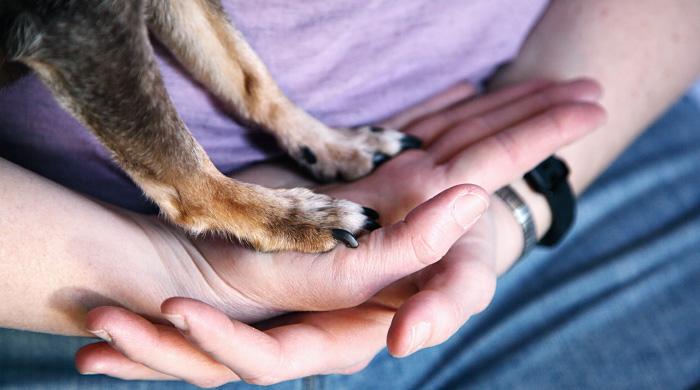 Covid 19, i consigli dei veterinari per la corretta pulizia