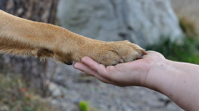 Salute E Benessere Degli Animali Da Compagnia Via Libera Agli Spostamenti