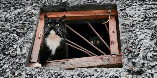 Immagine di un gatto